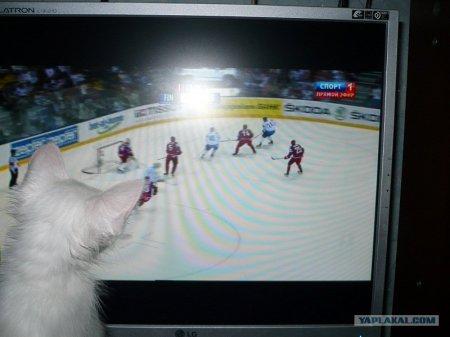 По какому каналу показывают хоккей ?:)